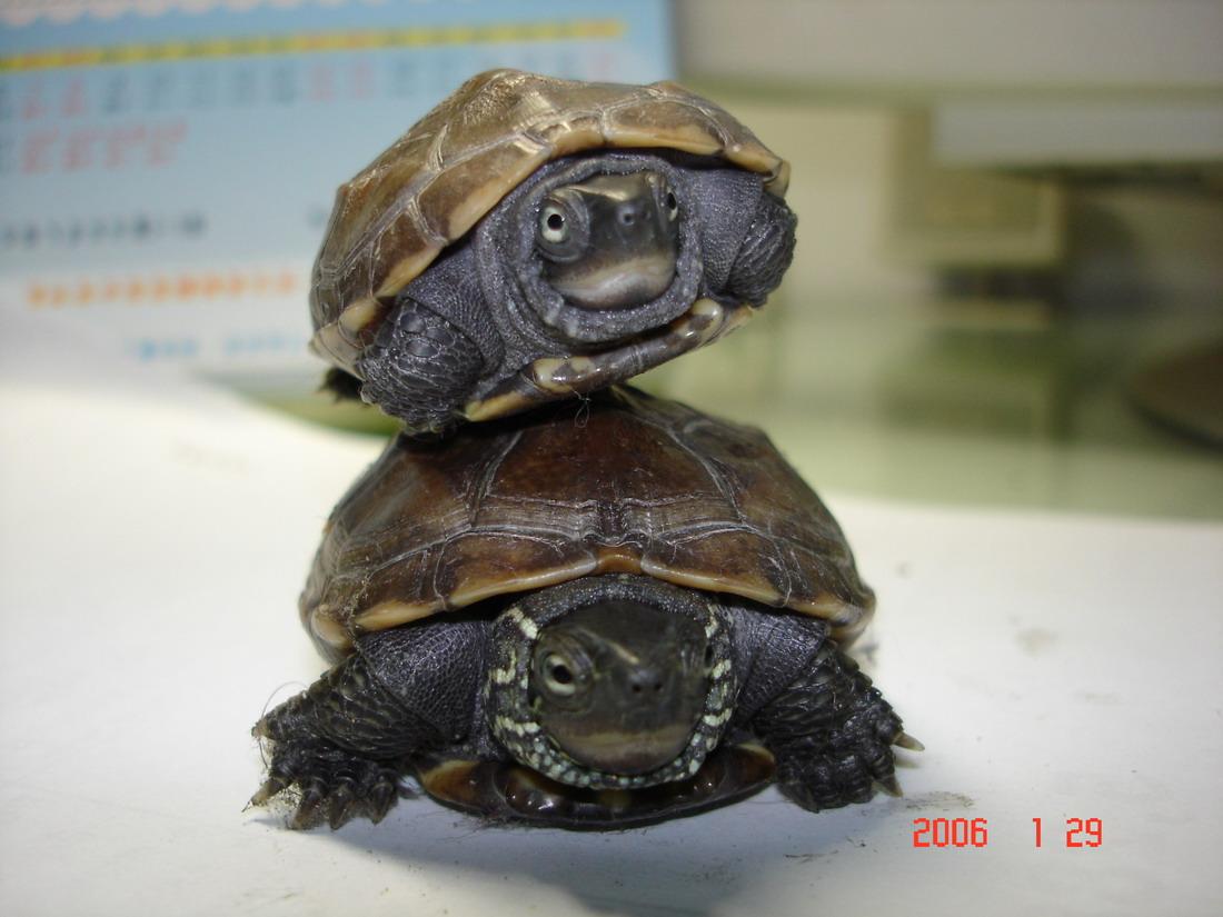 我家的两只小龟:) - 深圳房地产信息网论坛