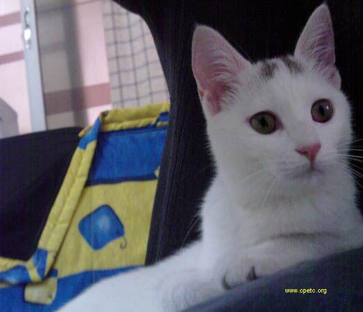 一只可爱的小白猫~~有谁想养猫猫么?