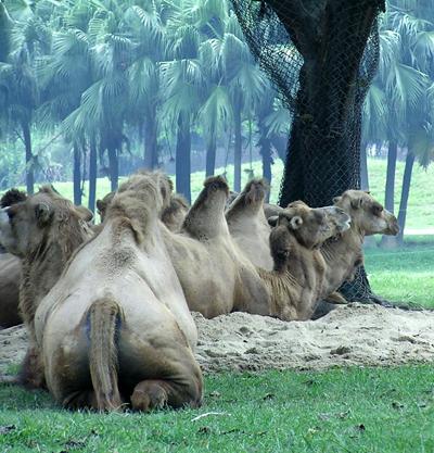 广州番禺香江野生动物园一天游