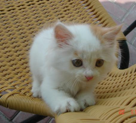 可爱小猫咪出售:)等你抱回家哦!(内空)