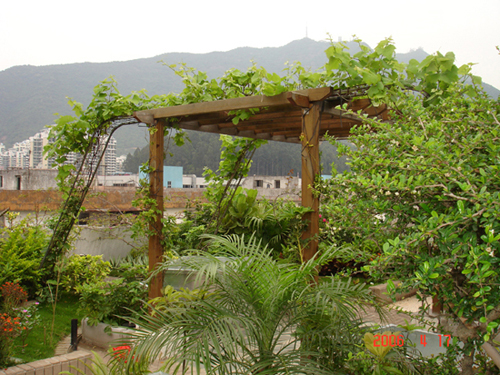 即将装修楼顶天台花园 征求有顶楼花园照片取经! 盼望中!