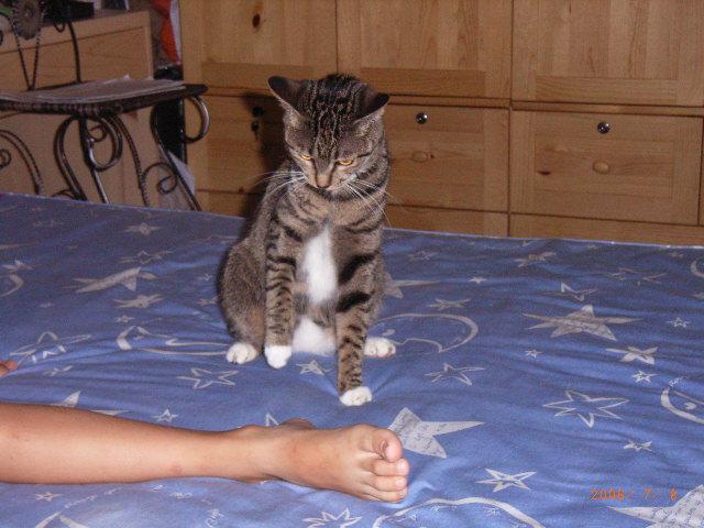 无聊图片可爱的猫猫