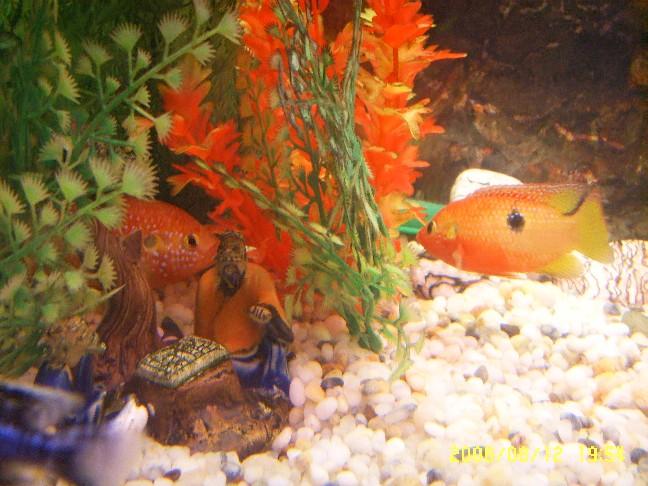红可爱小鱼图片大全