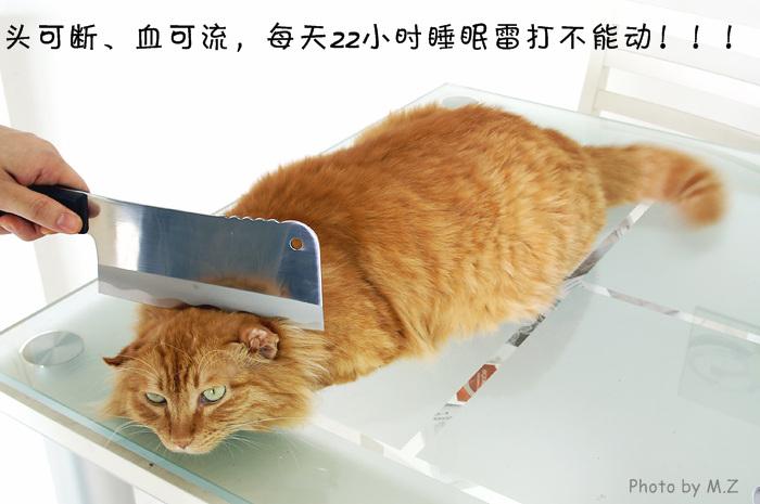 > 世界上最勇敢的猫-战斗猫