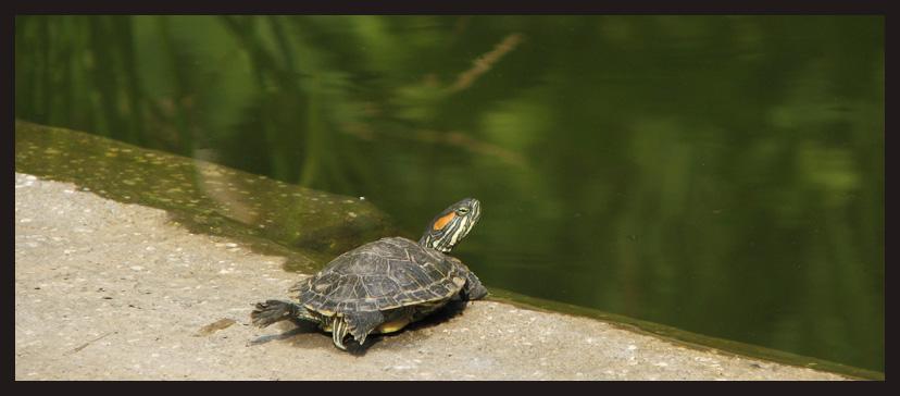 晒太阳的小乌龟和小蜻蜓
