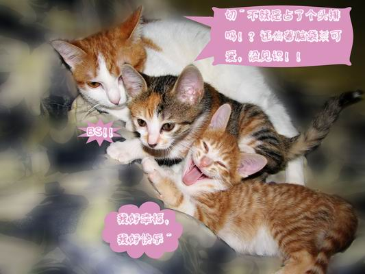 > 可爱的小猫猫,可领养