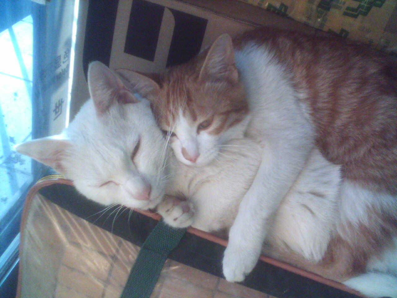 壁纸 动物 猫 猫咪 小猫 桌面 1280_960