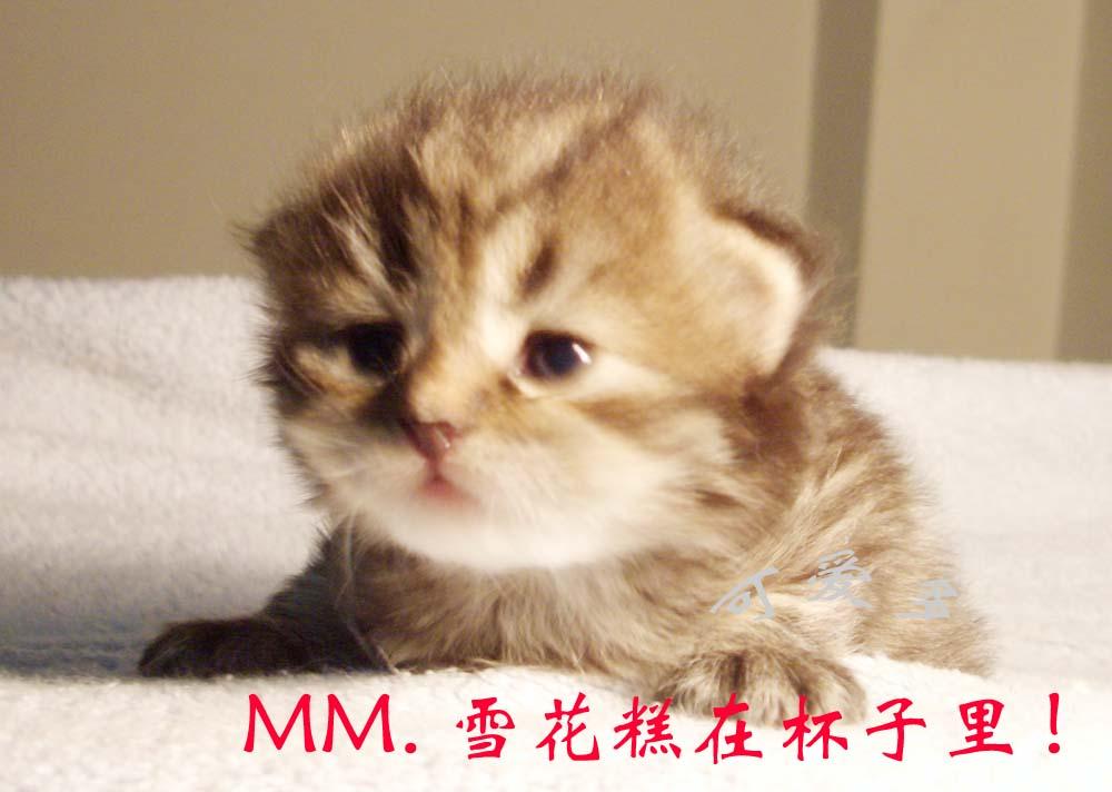 杯子猫咪图片大全可爱