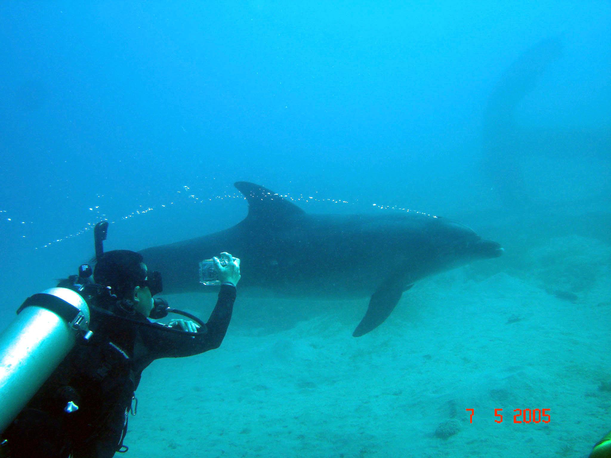 本周日深海漫游国外潜水摄影展--业委会办公室