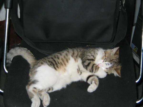 真的很可爱.发张我养过的猫猫的睡觉照片.
