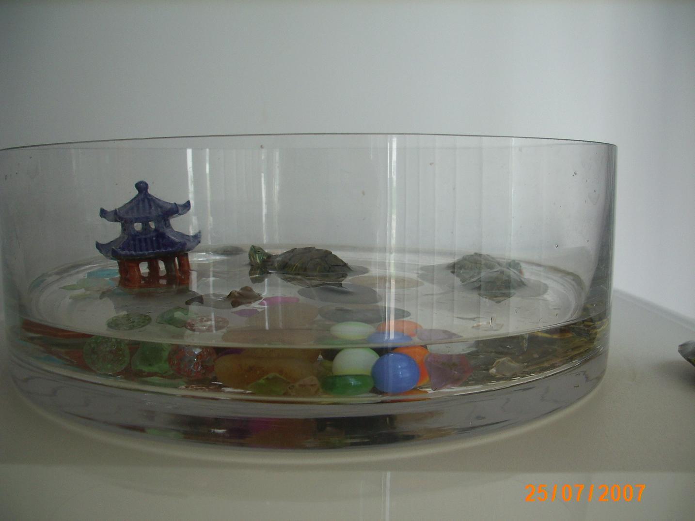偶养的乌龟--陪伴了我二年时间图片