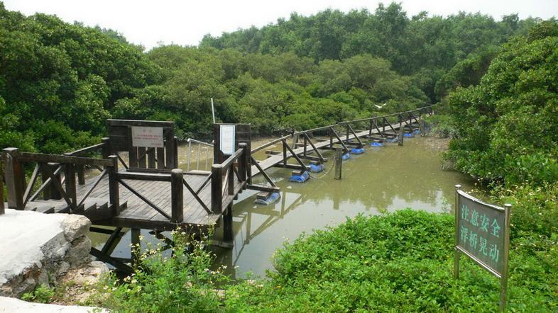 深圳湾红树林湿地纵观