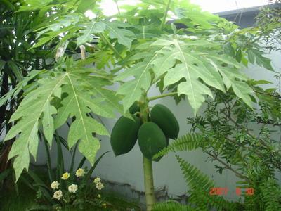 背景 壁纸 绿色 绿叶 树叶 植物 桌面 400_300图片
