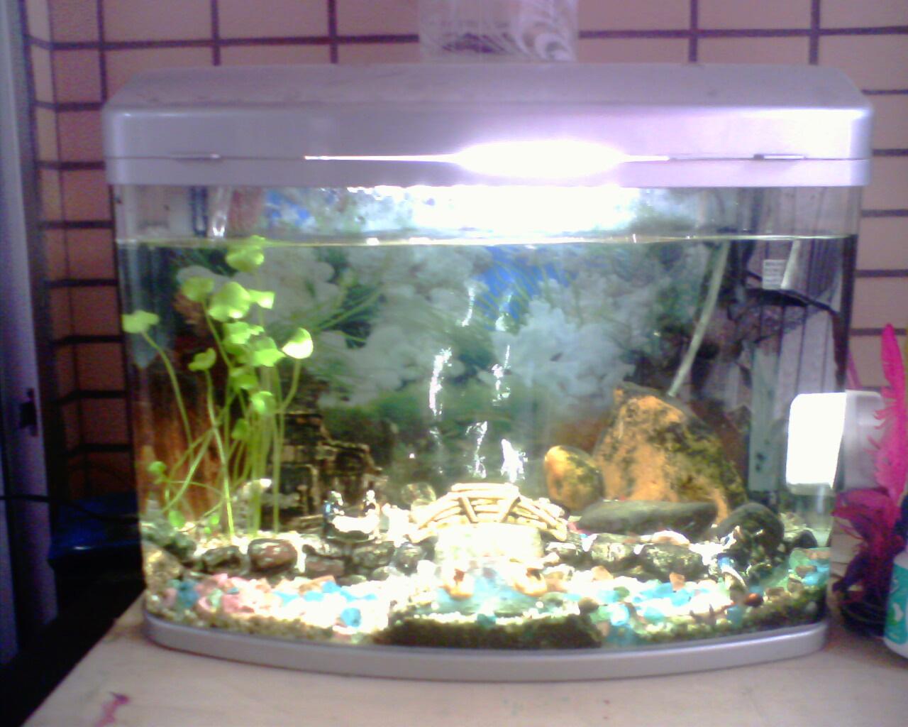 青岛风景鱼缸图片大全