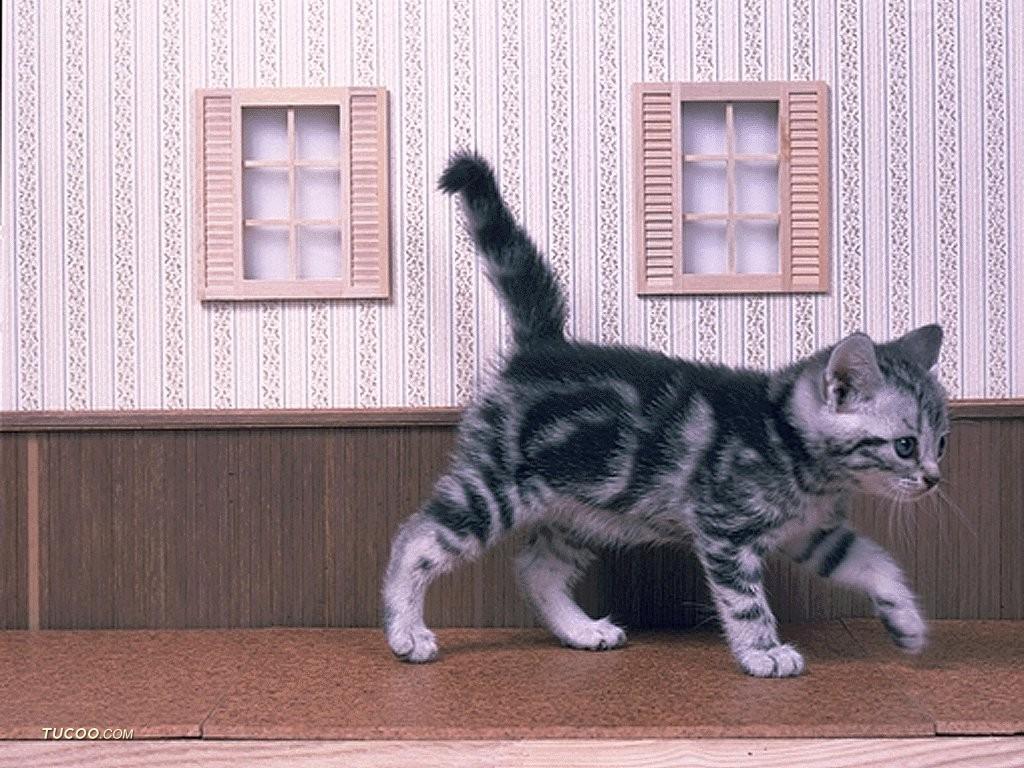 你有小动物相片也可秀秀