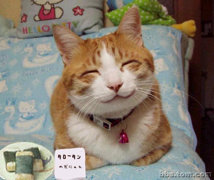 壁纸 动物 猫 猫咪 小猫 桌面 710_600