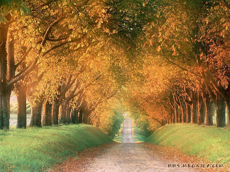 壁纸 风景 森林 桌面 800_600