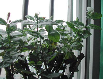 盆景 盆栽 植物 400_306
