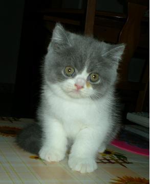 这是四十多天的相,现在猫猫已经两个多月了,还越大越可爱