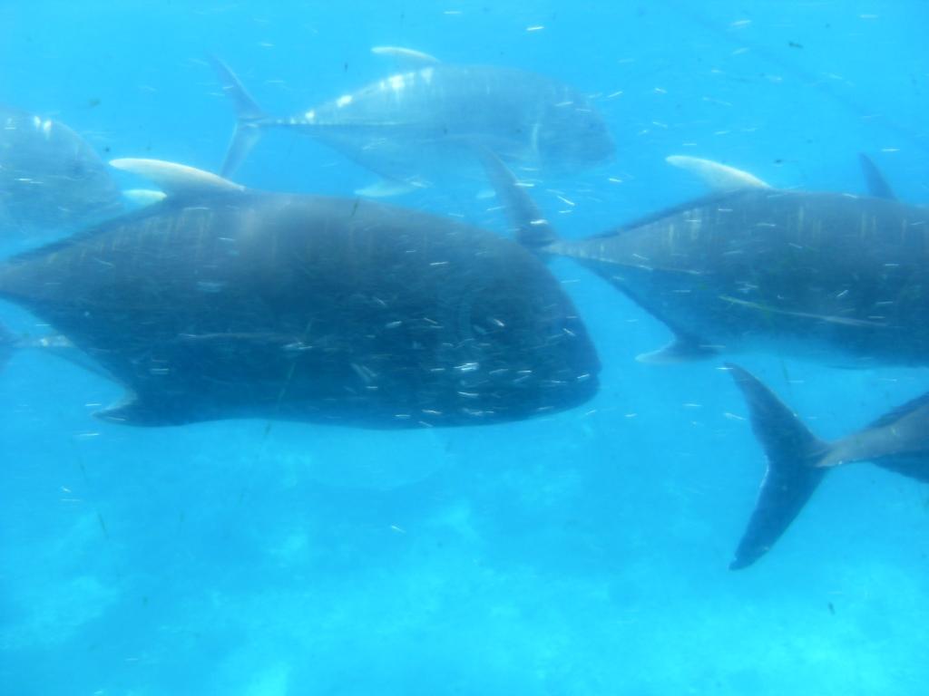 乘坐潜水艇在海底拍的鱼,海底世界很壮观的,可以看到珊瑚