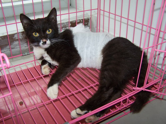 > 漂亮可爱的流浪小猫找领养